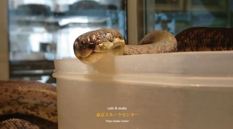 ヘビらしいヘビとは