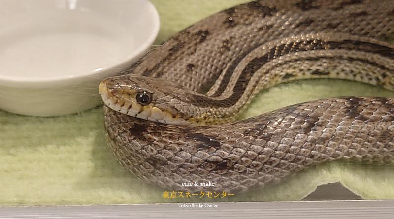 逃げたヘビ見つかった?